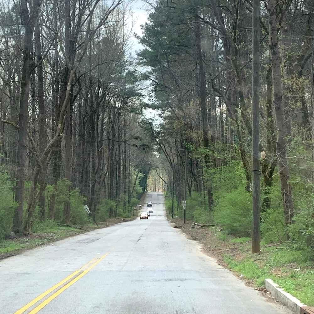Southwest Atlanta tree canopy